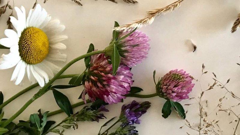 Pressa blommor och växter